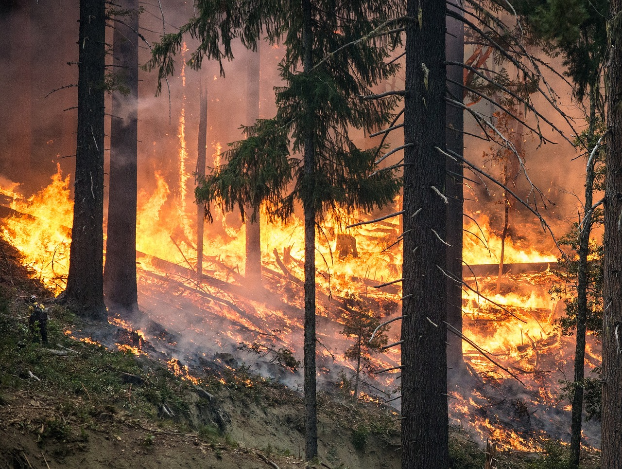 2017 has seen an unusually high number of wildfires worldwide.